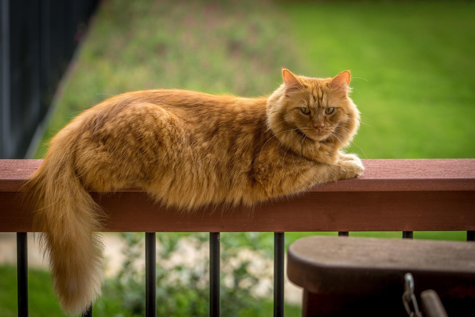 gato que mira su cola