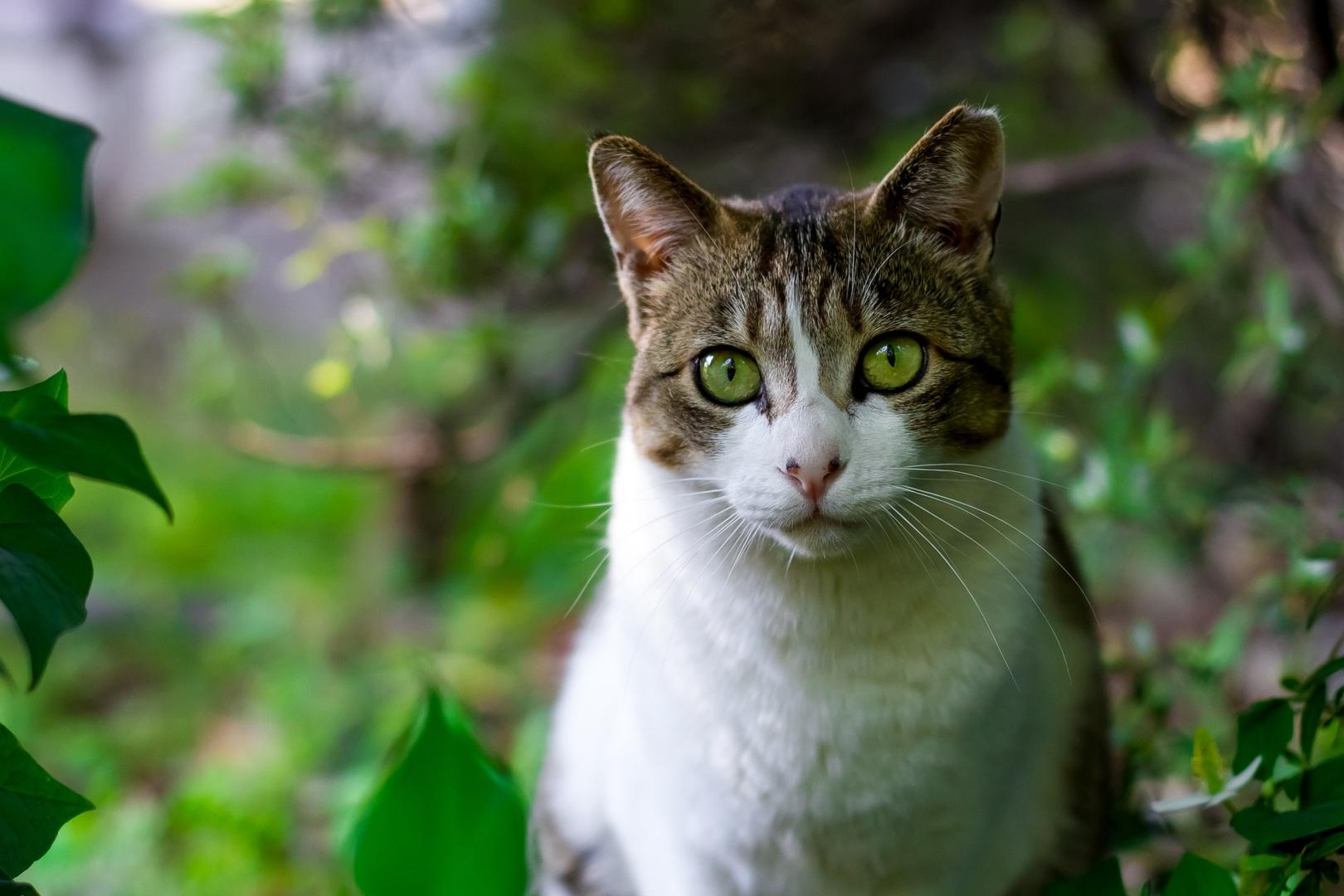 Por qué los gatos tienen siete vidas