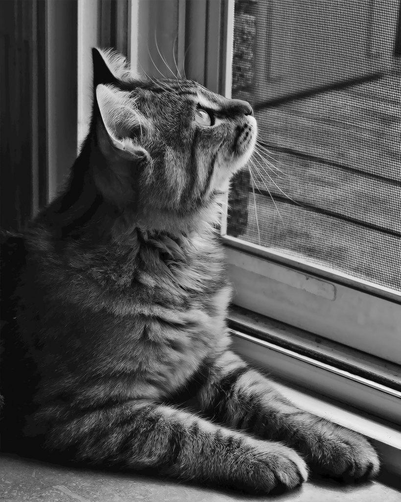 Gato sentado en la puerta