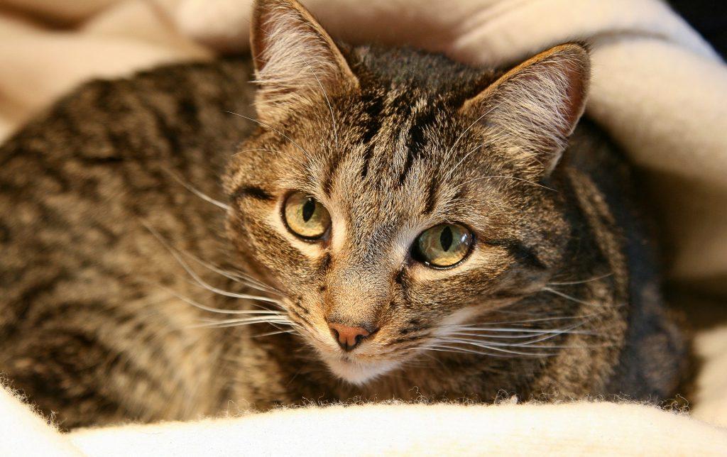 Información sobre gatos