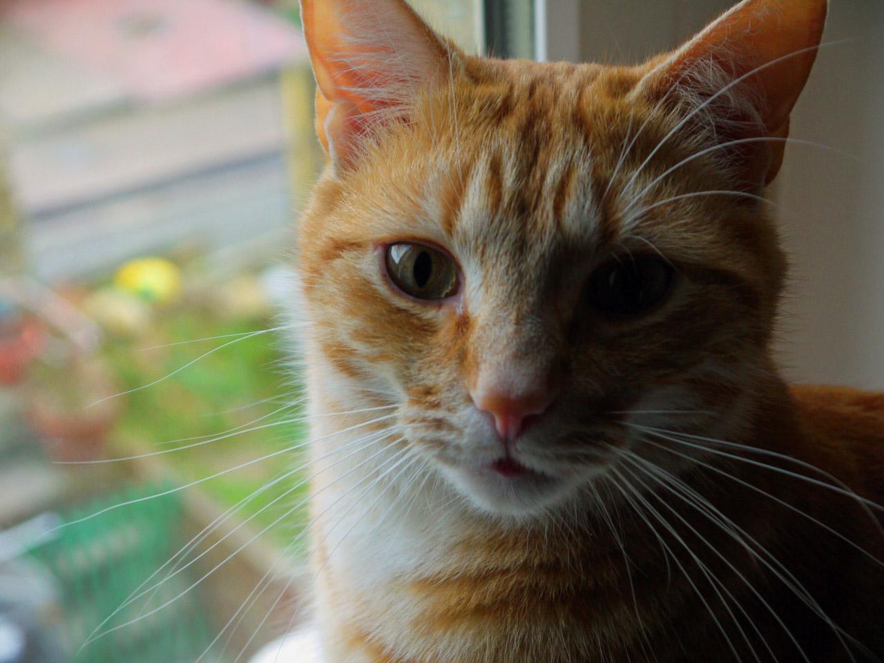 Función de los bigotes de los gatos